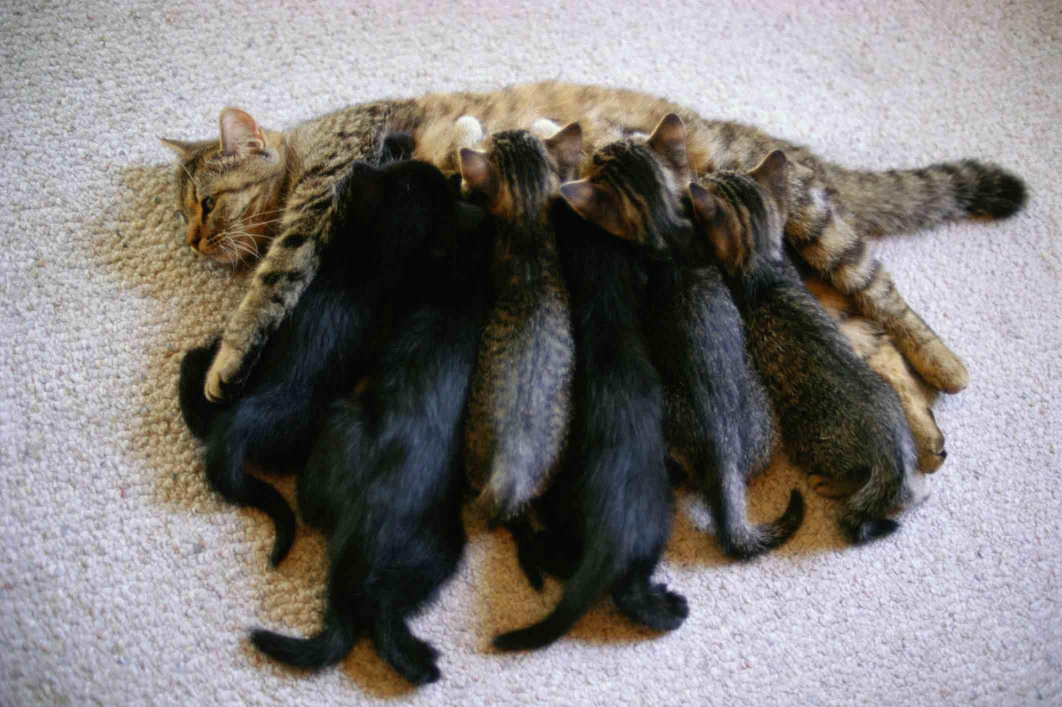 Foto de una camada de gatitos de enfermería