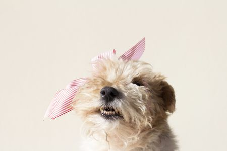15 Best Cute Names For Female Dogs