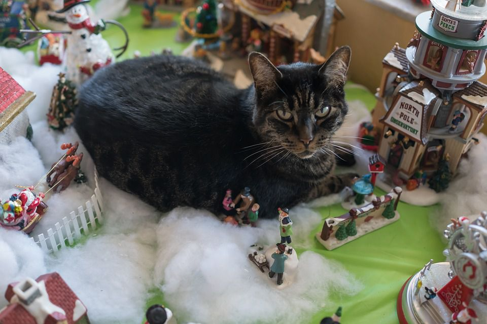 A grey cat sitting on Christmas decorations