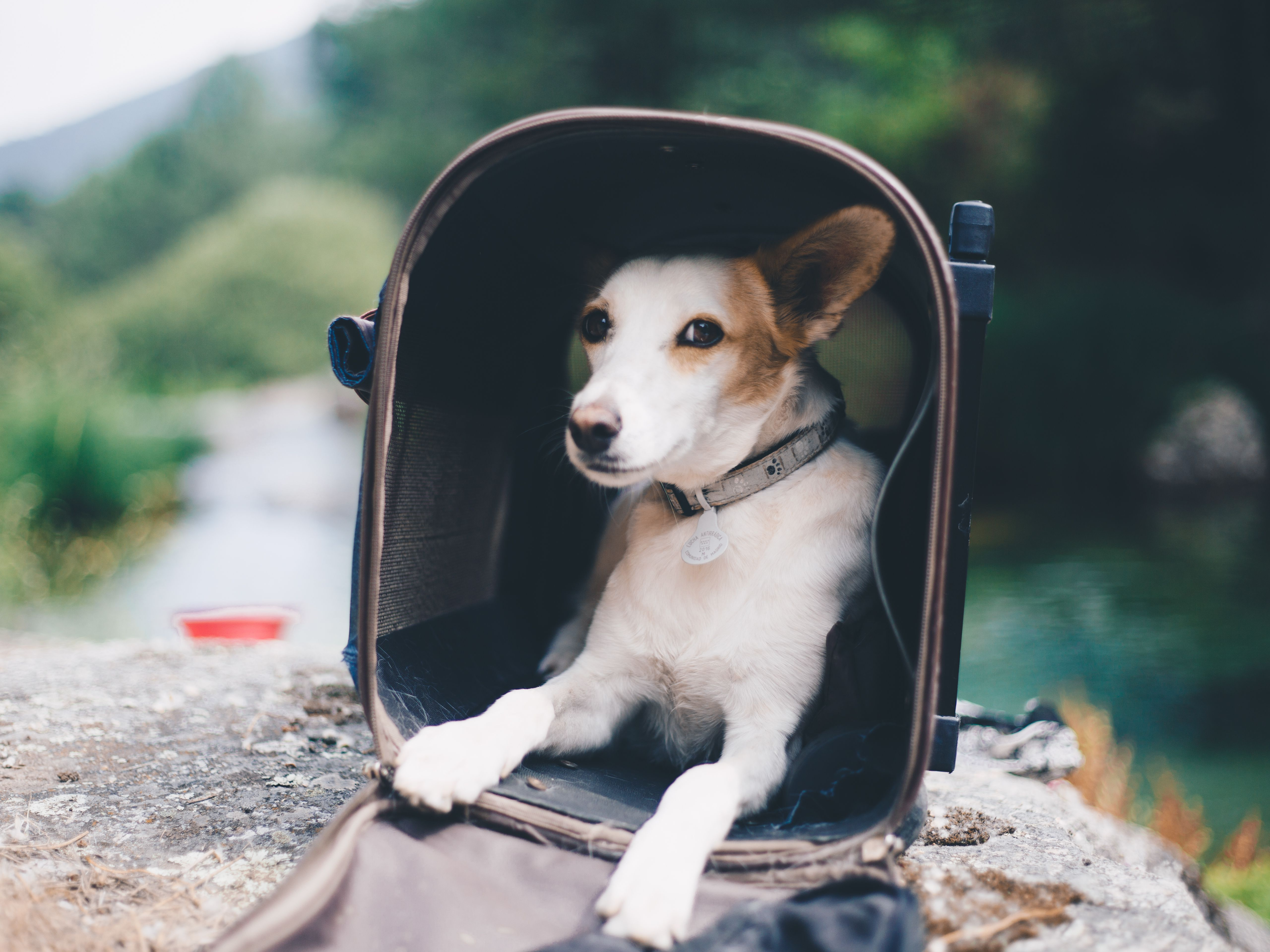 63016ebebd The 7 Best Dog Carriers of 2019