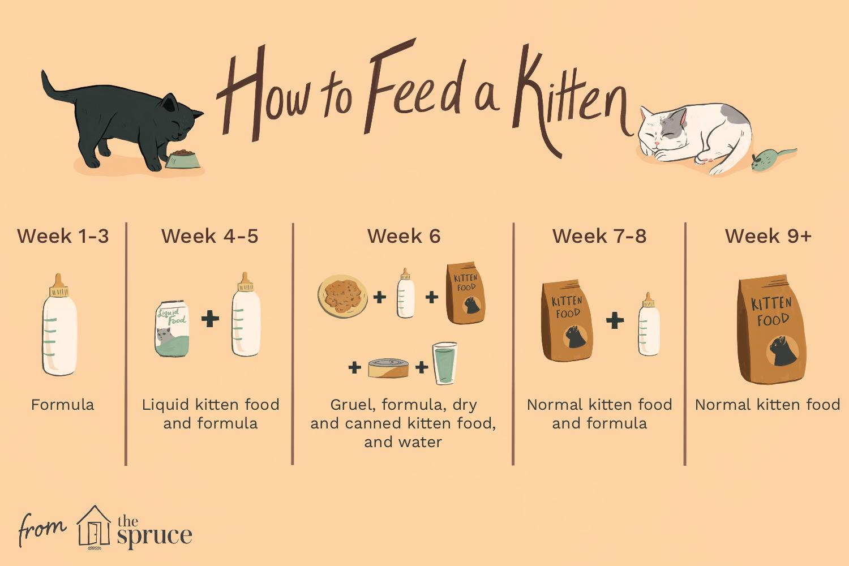Kitten Feeding Schedule by thevetscare.com