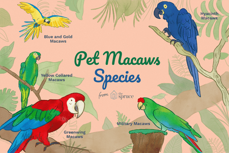 Different Types of Pet Macaws