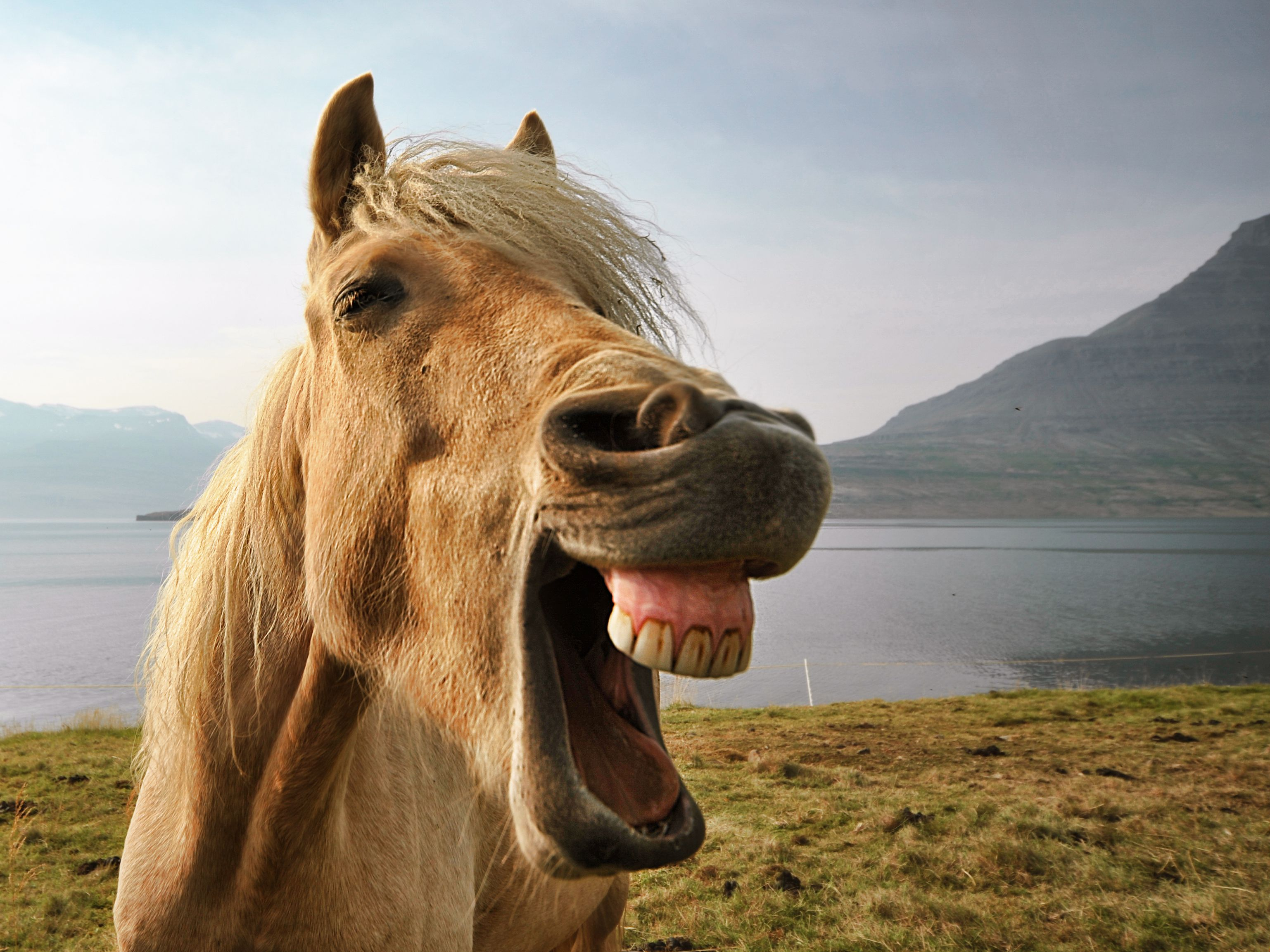 How Horses Express Stress