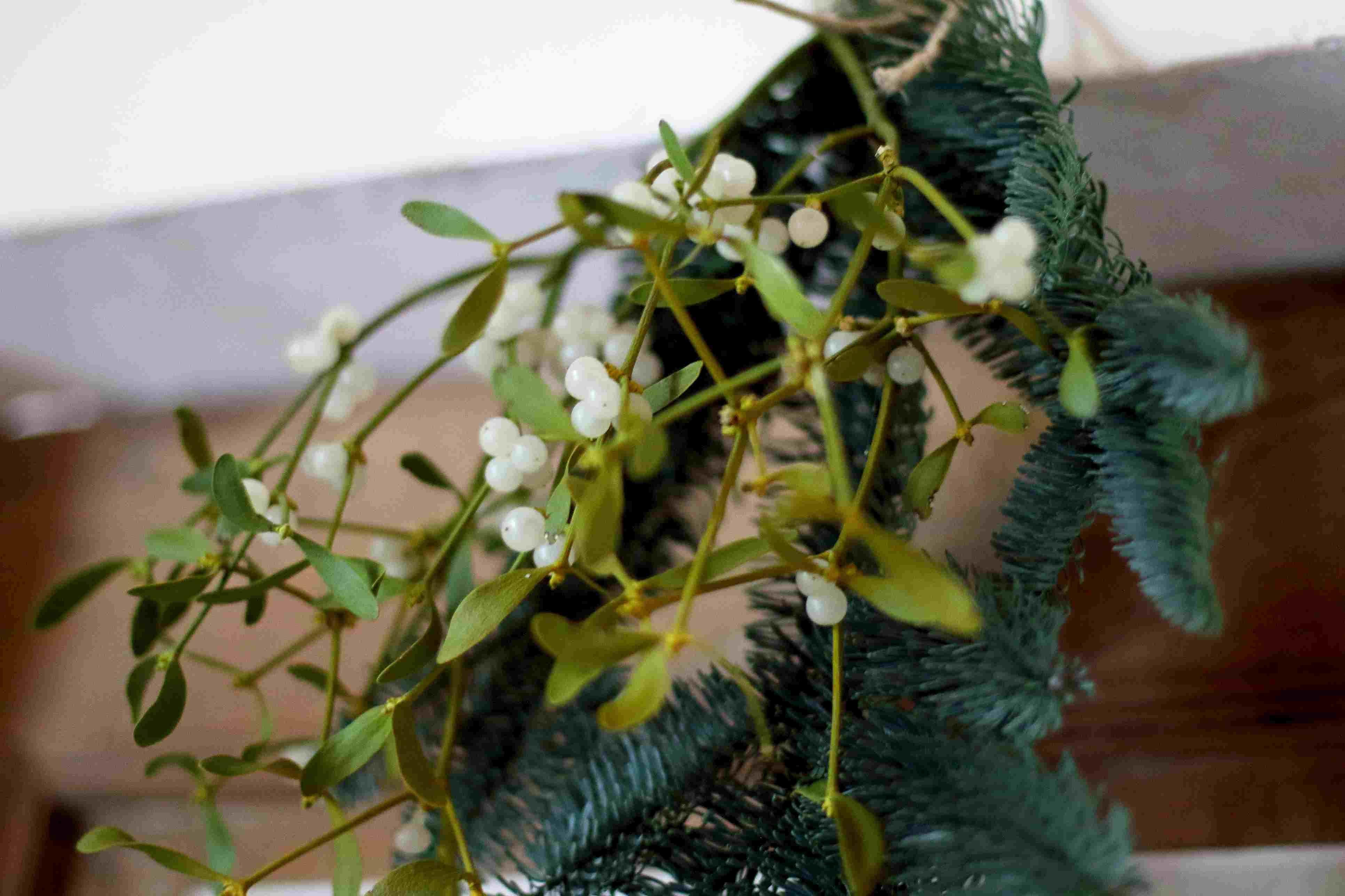 Mistletoe hanging on a wall