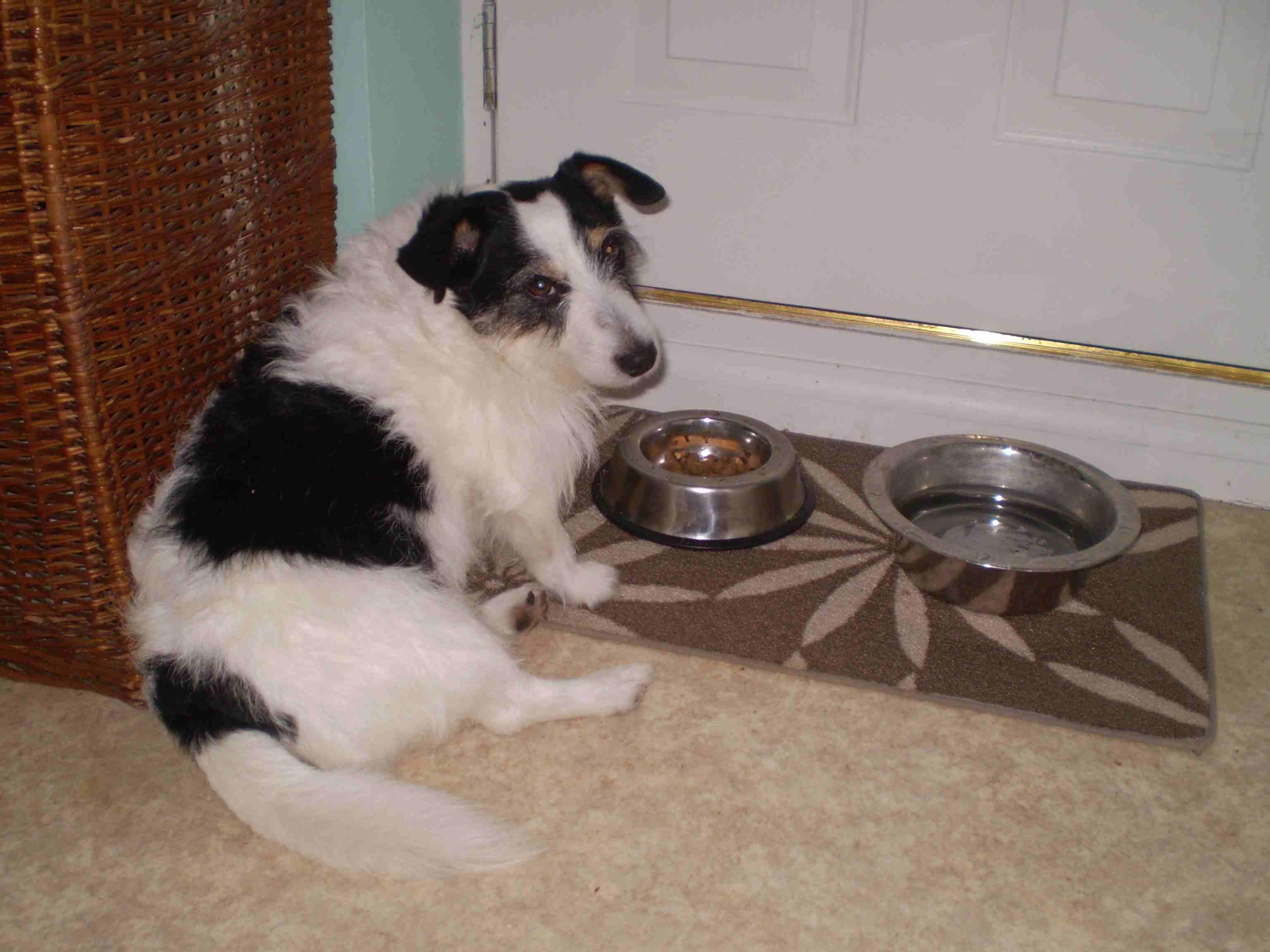 Perro sentado frente a tazones de comida