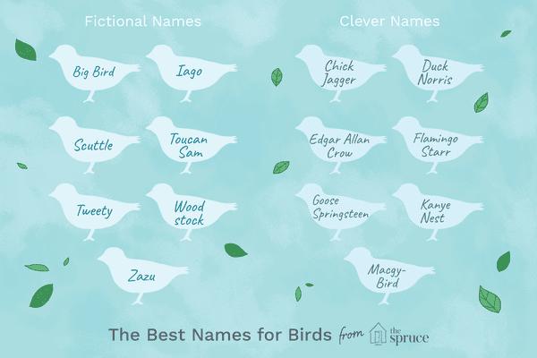 name ideas for birds