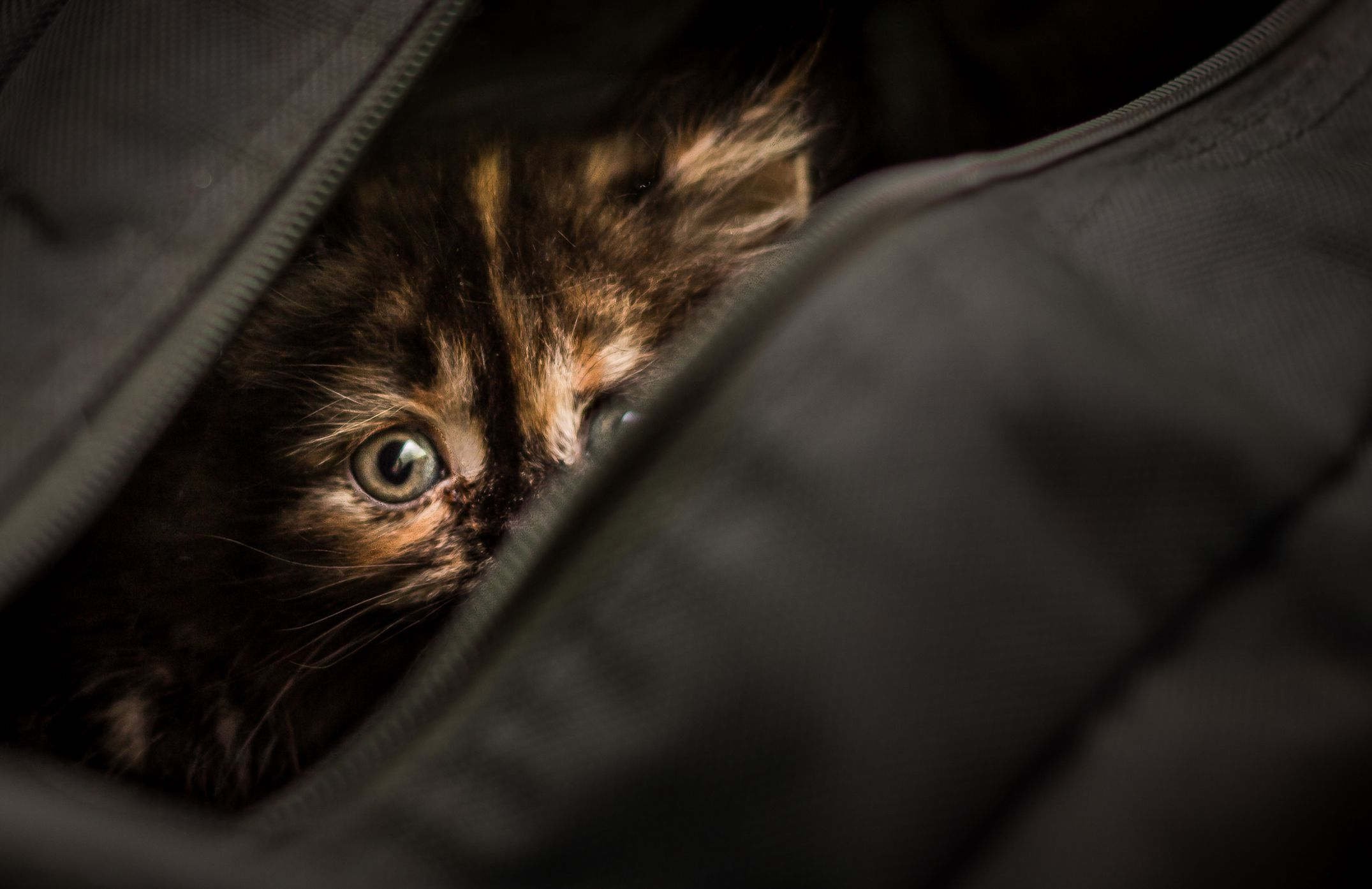 Emergency Preparedness With Pets
