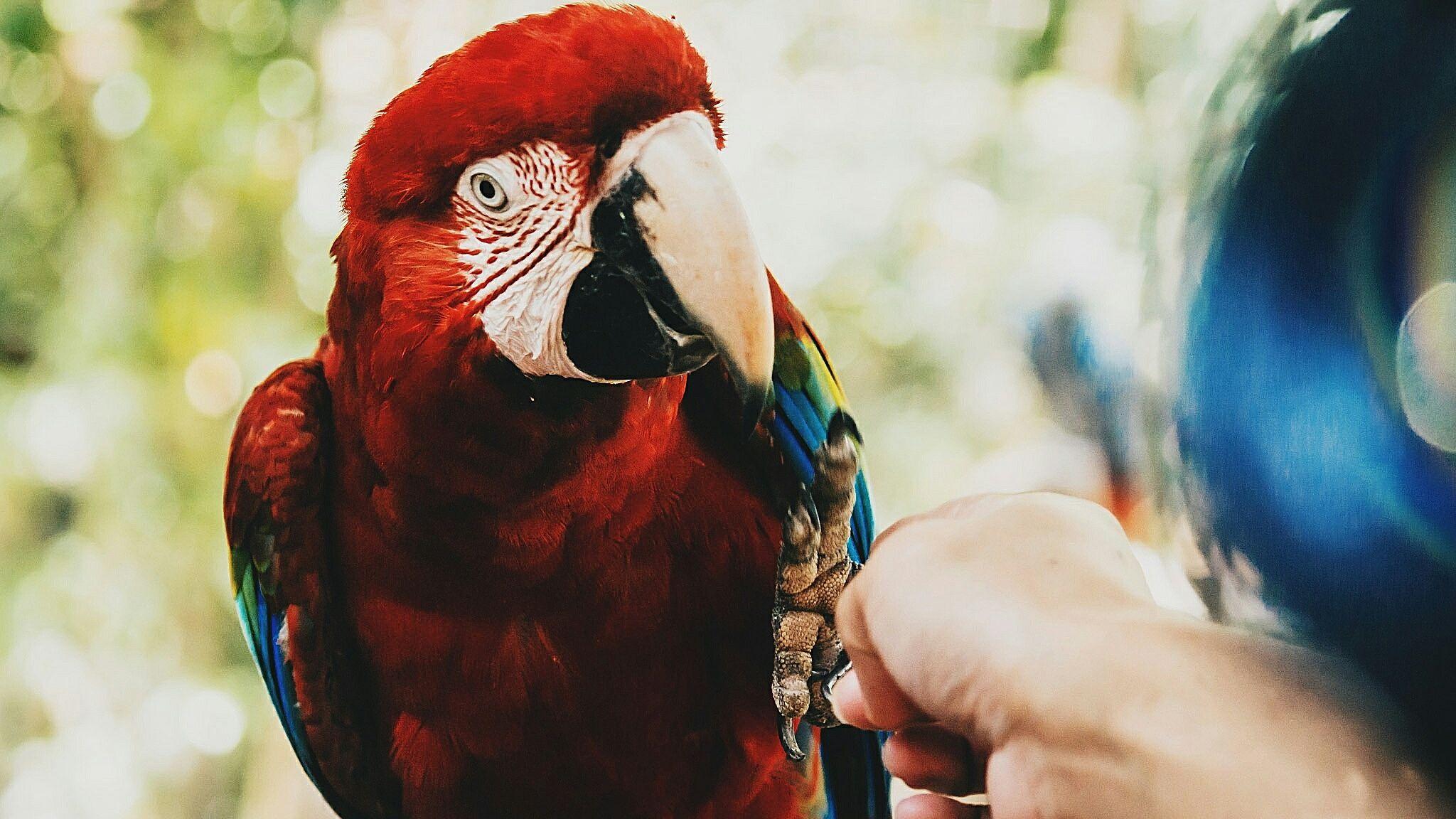 8 Top Pet Birds For Training