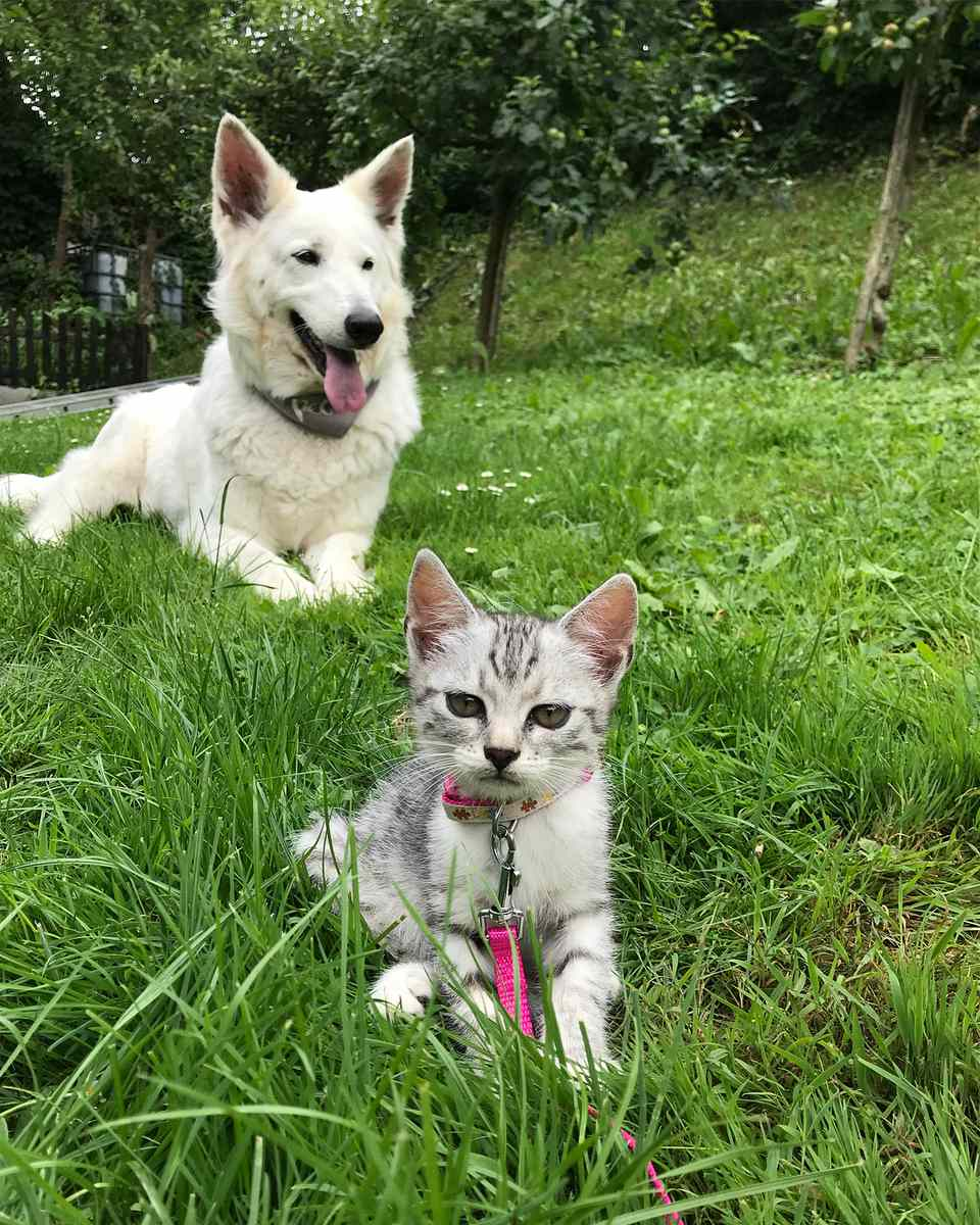 Kitten wearing a pink collar in a grassy field with a dog.