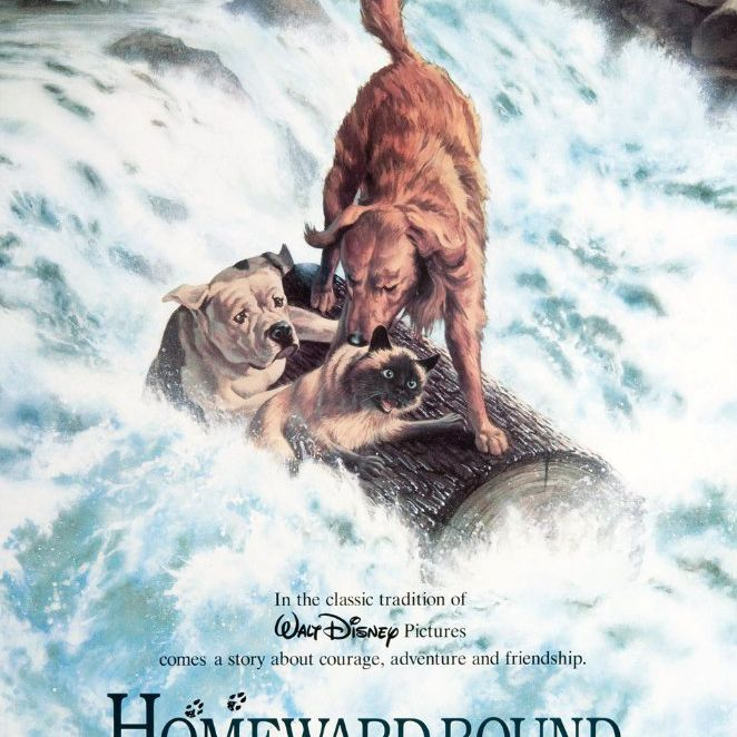 homeward bound the incredible journey dog movie