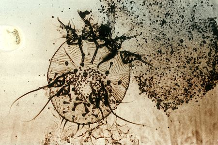 how to treat mange in horses