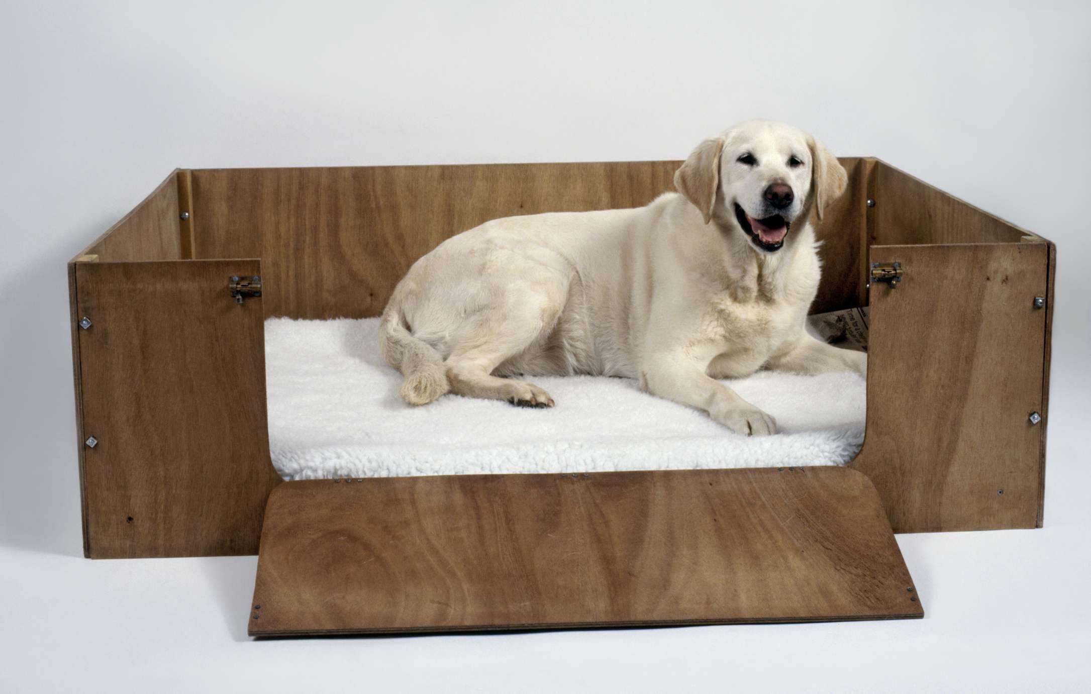 Perro en caja de parto