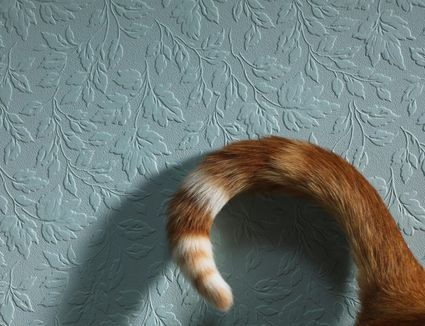 Cat's tail curled