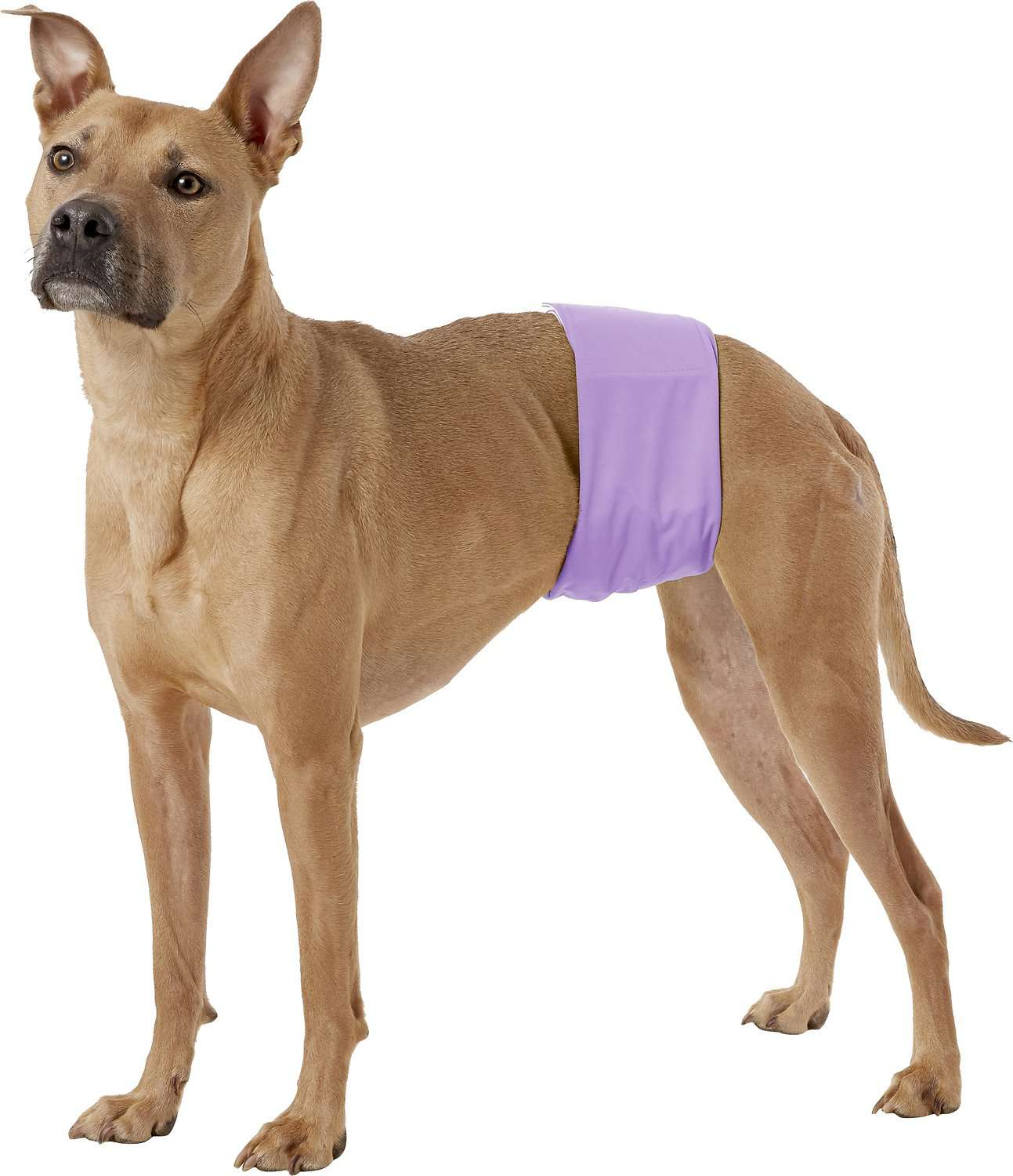 Pet Magasin Washable Belly Nappies Male Dog Diapers