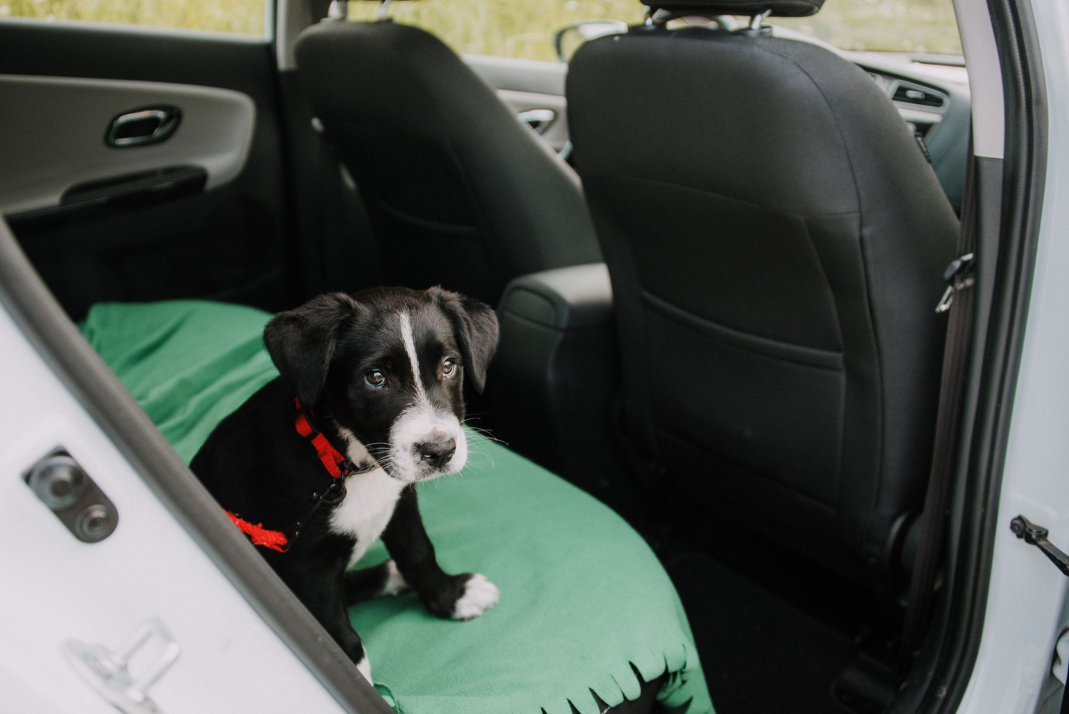 the 8 best dog seat covers of 2019