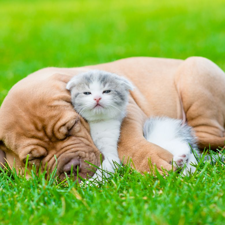cat and dog lying together in grass