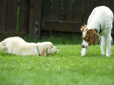 When Should You Get Another Dog After Your Dog Dies?