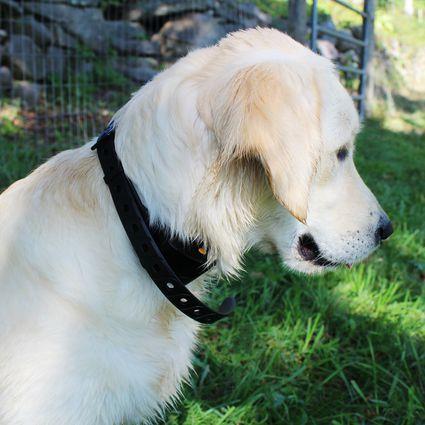 Wolfwill No-Shock Dog Training Collar