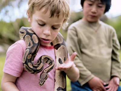 Caring for Pet Boa Constrictors
