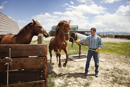 Rigs, Ridglings or Cryptorchidism in Horses
