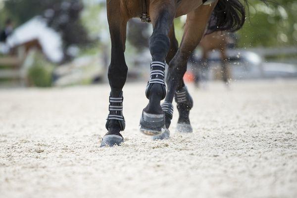 Horse legs in motion