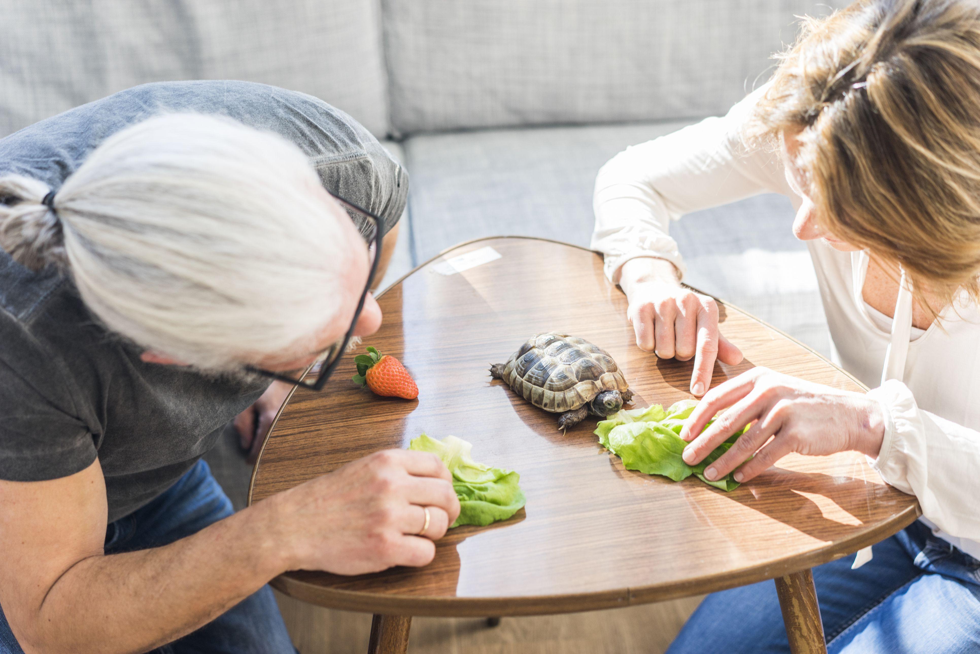 Pareja madura, alimentación, tortuga, en casa