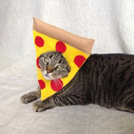 0a11d05fd 15 Purrfect Halloween Costumes for Your Cat