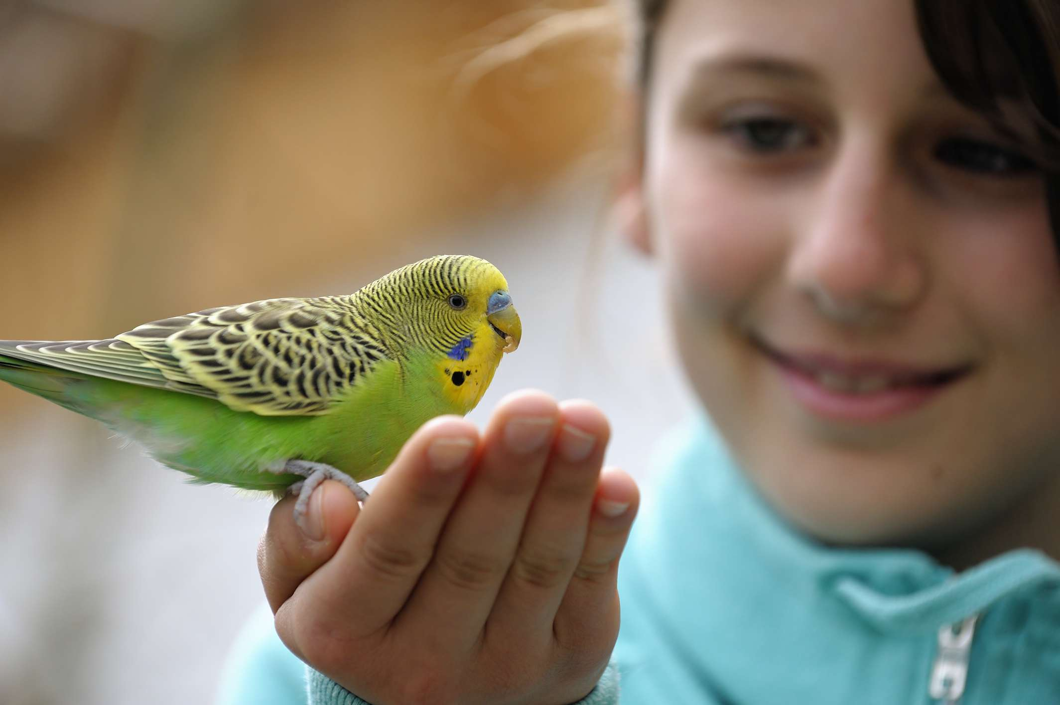 Girl with a green budgie sitting on her hand