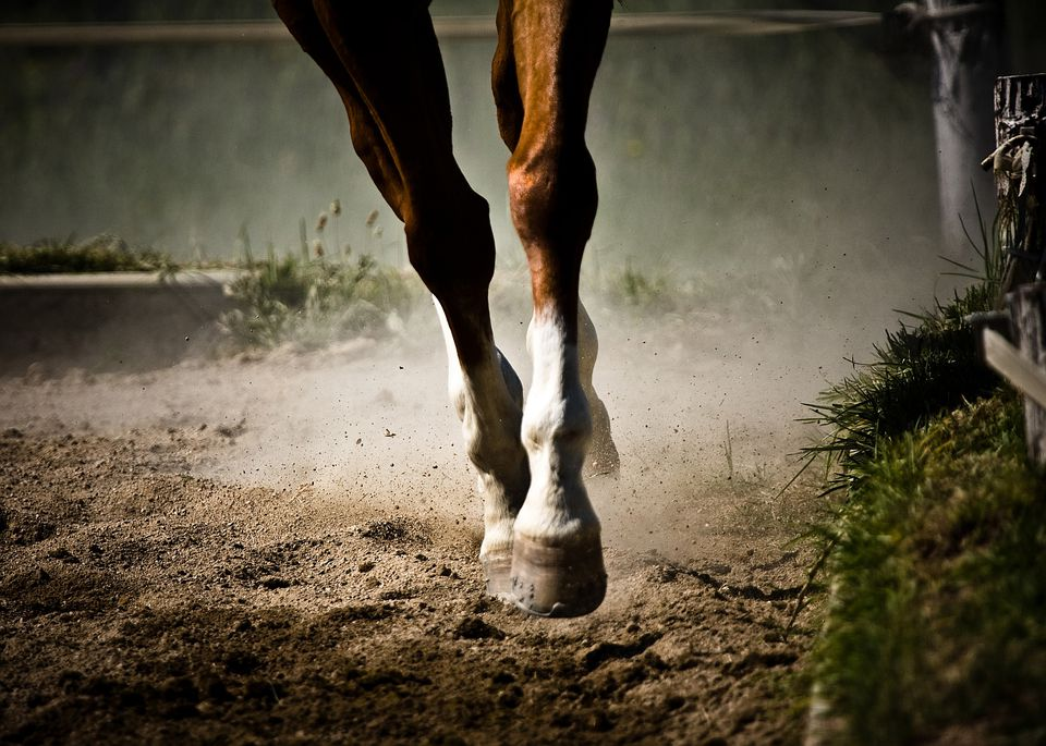 Horse's front legs at the trot.