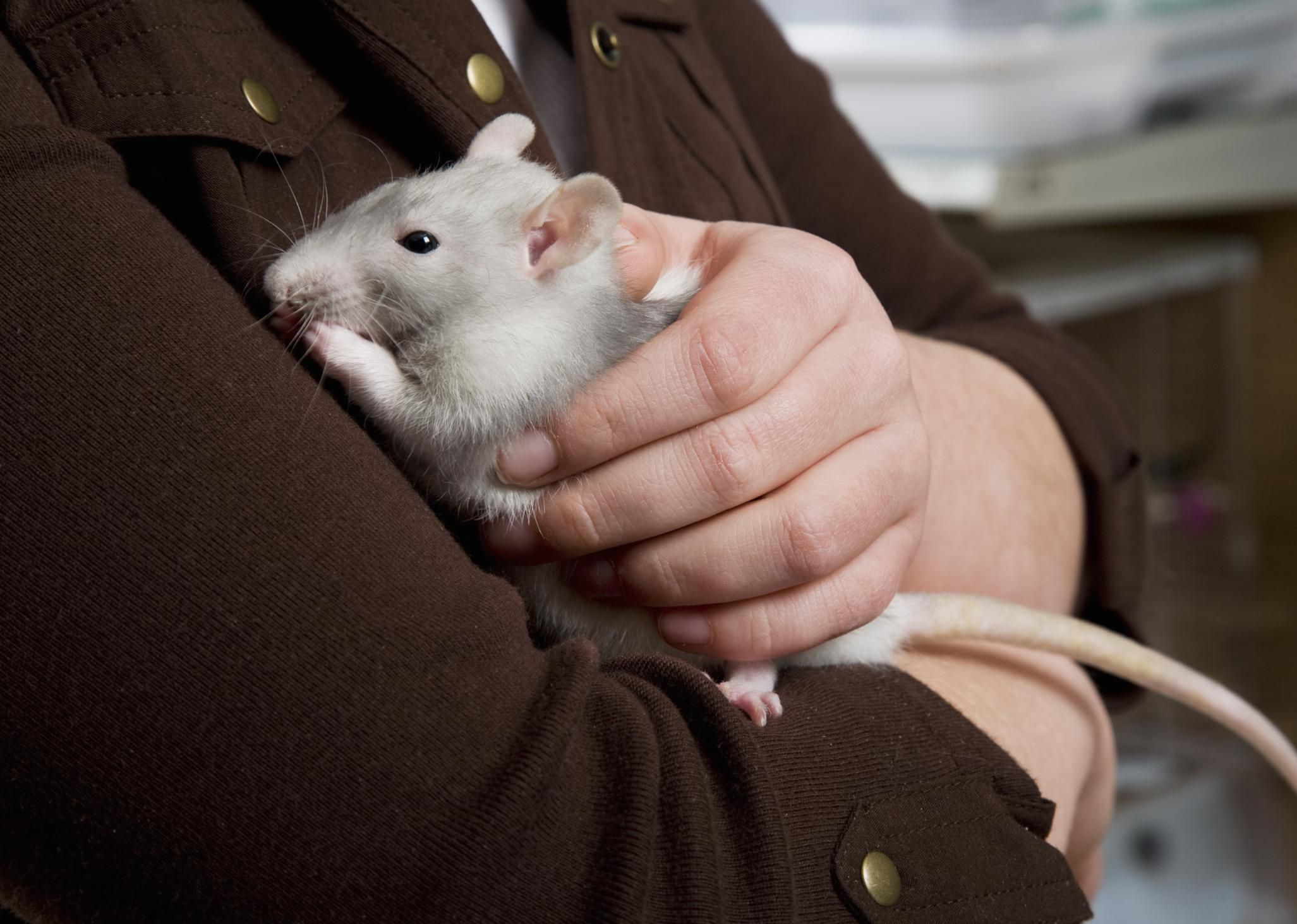 Keeping and Caring for Rats as Pets