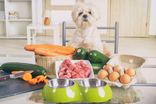 homemade dog food recipes