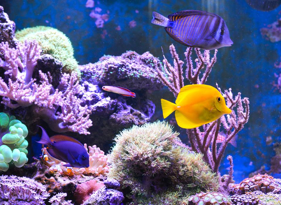 Reef tank, marine aquarium filled with water for keeping live underwater animals. Day view.