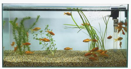 aquarium basics types of filtration systems