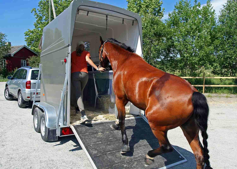 Loading horse onto ramp trailer.