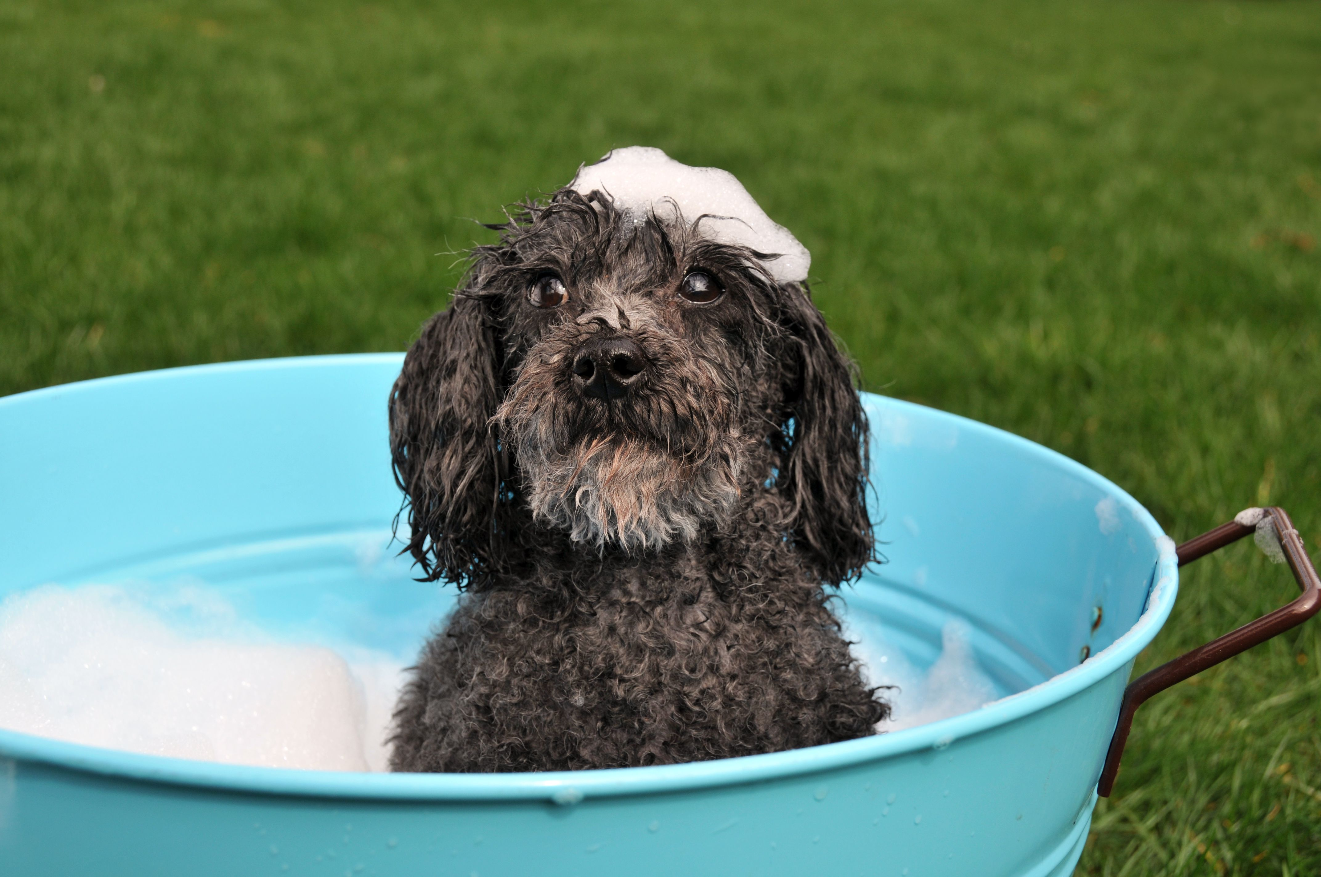 What Age Can You Bathe A Dog At?