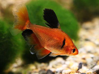 Popular Aquarium Fish Profiles