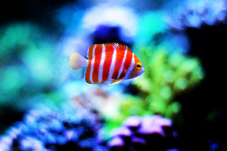 Rare R Aquarium Fish