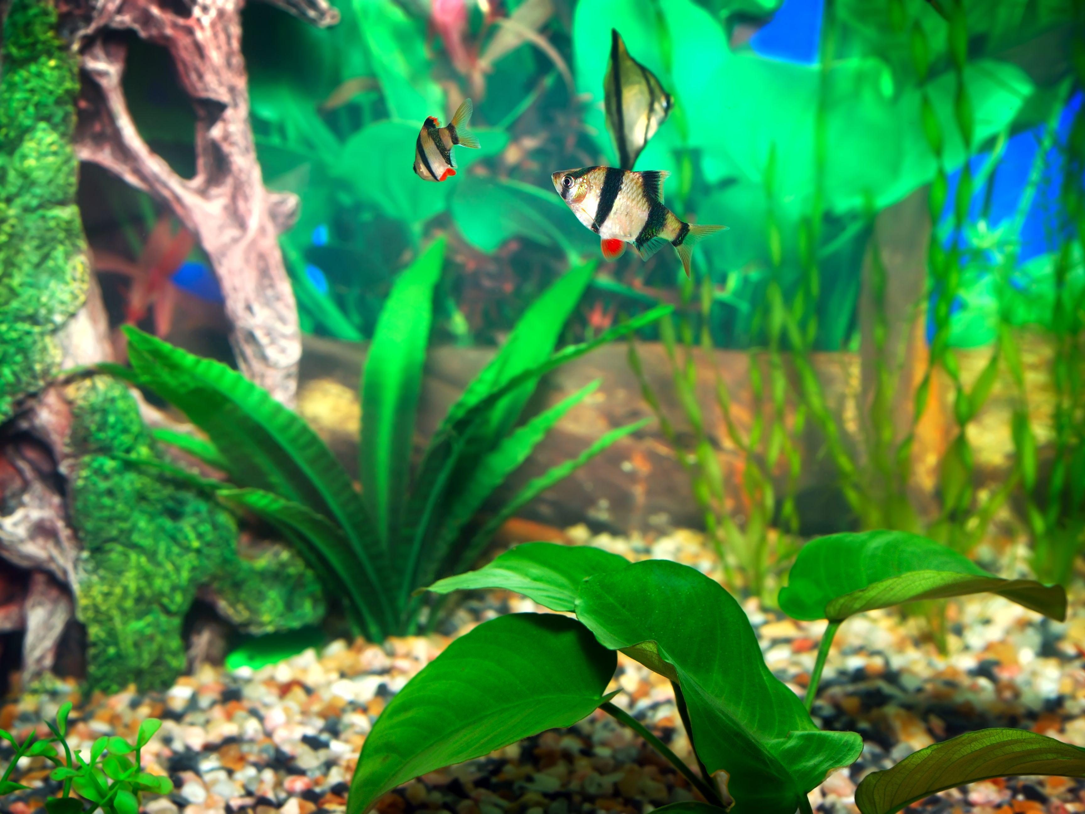Using Bleach To Clean Your Aquarium
