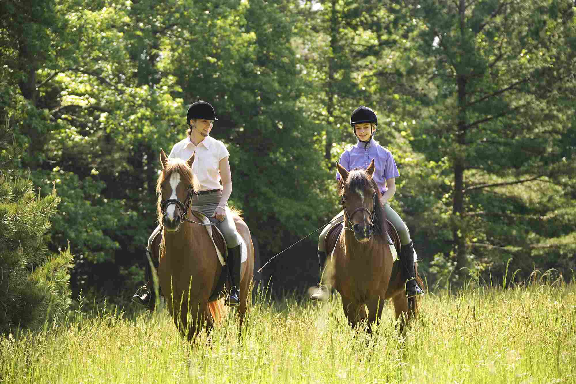 10 Popular Horse Quotes Explained