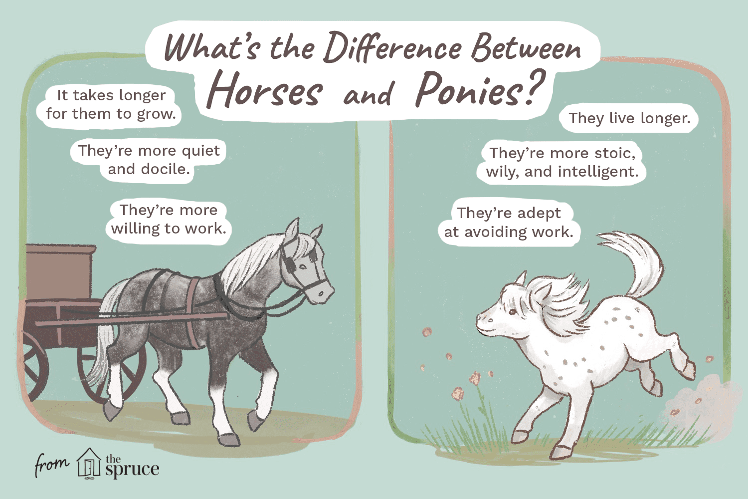 difference between horses and ponies illustration
