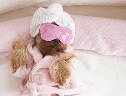 A dog wear a robe, sleep mask and towel on its head.