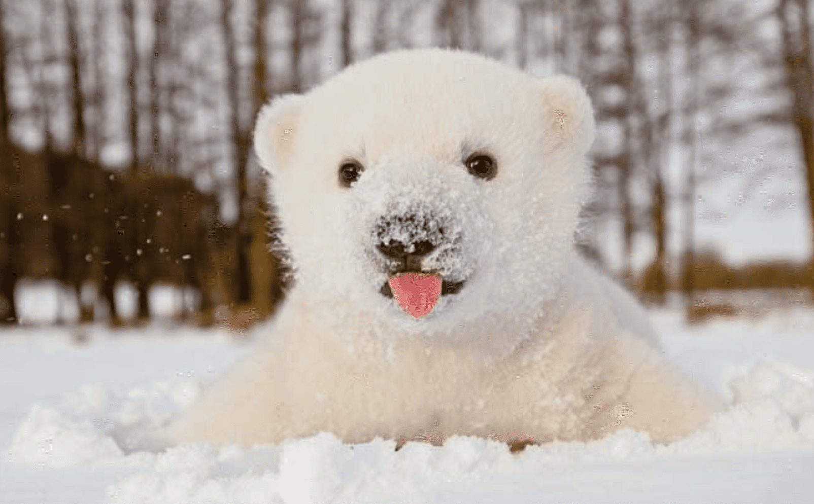 12 Baby Animals Who Are Excited for Winter