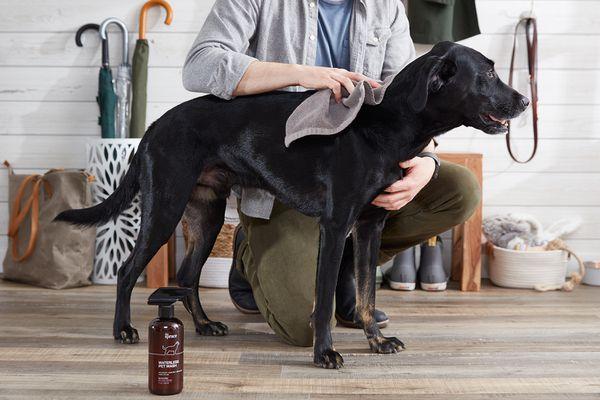 Man kneeling next to a black dog, using waterless pet wash