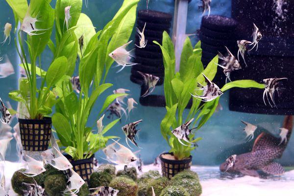 beautiful planted freshwater aquarium