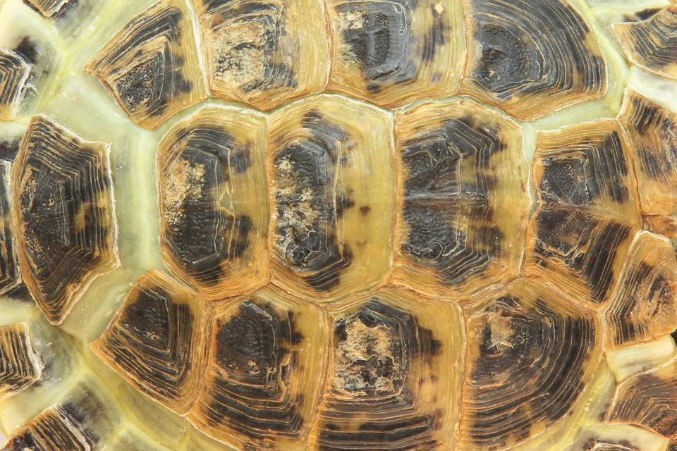 Close-up of a tortoise shell