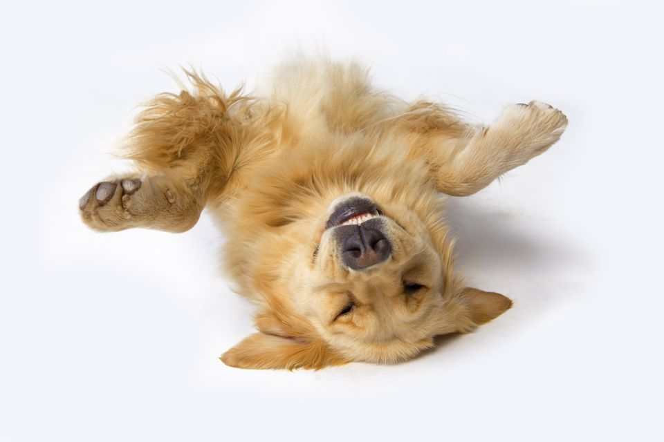 dog playing dead