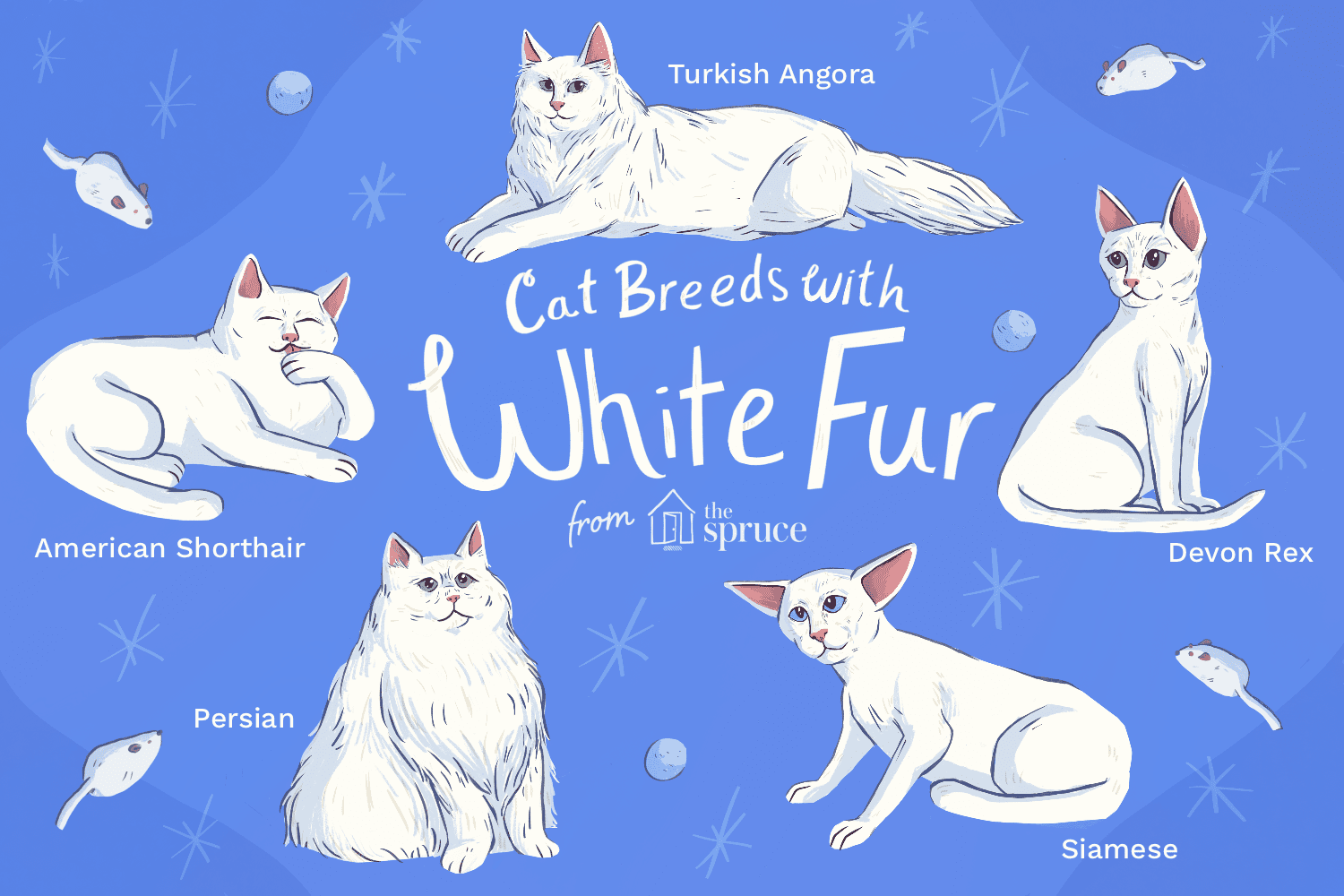 white cats by thevetscare.com