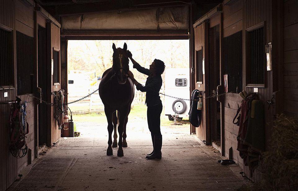 Horse grooming