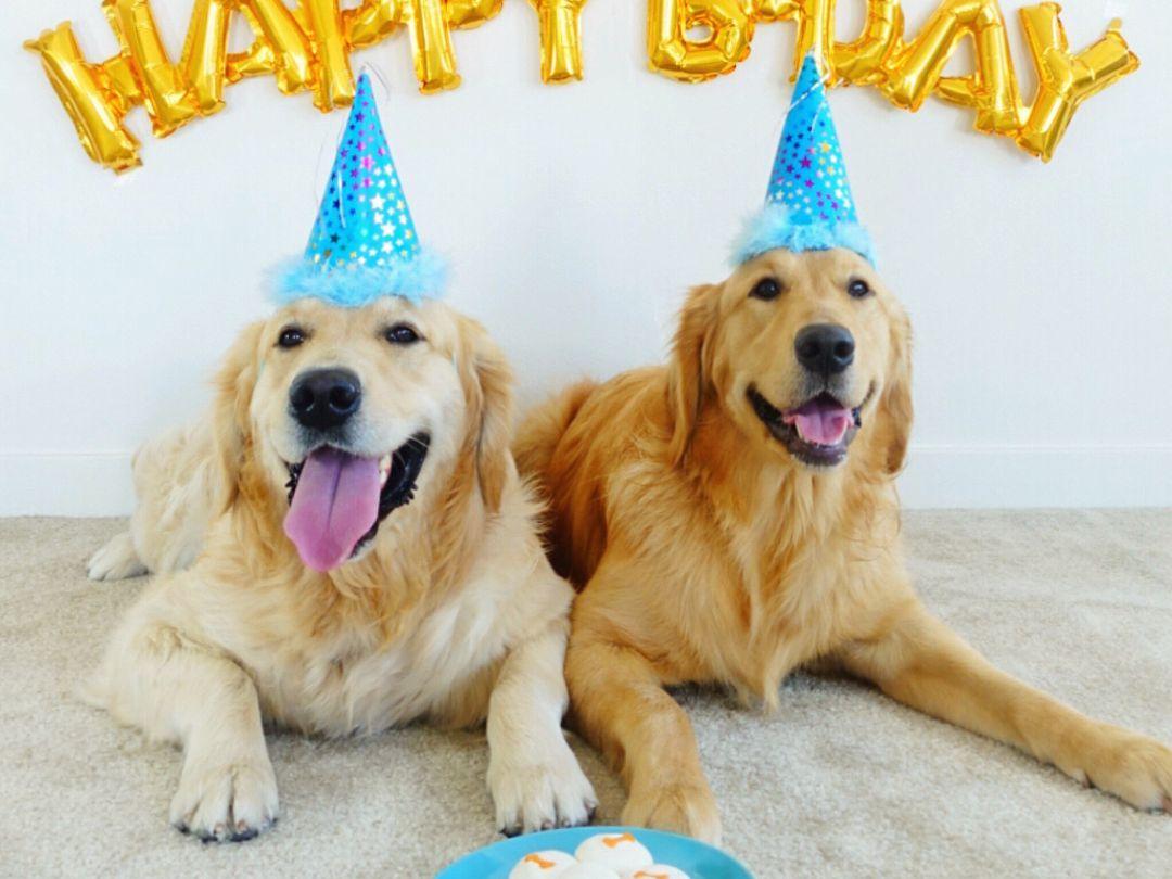 10 Ways To Celebrate Your Dog S Birthday