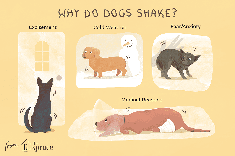 why do dogs shake illustration